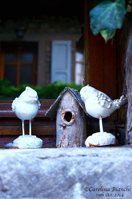 La maison de l'oiseau. 🏡